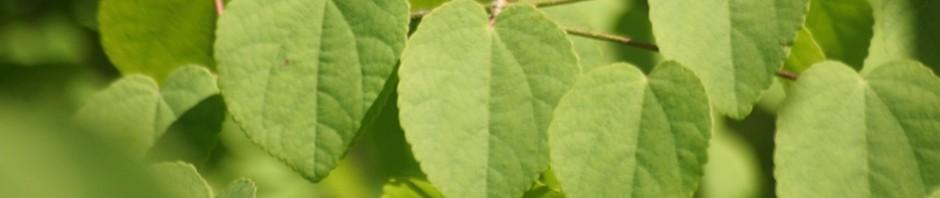 Durham Home ? Cyanistes caeruleus ? Blue Tit ? nest box ? webcam image ...