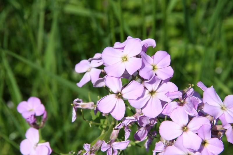 4 petalled flower