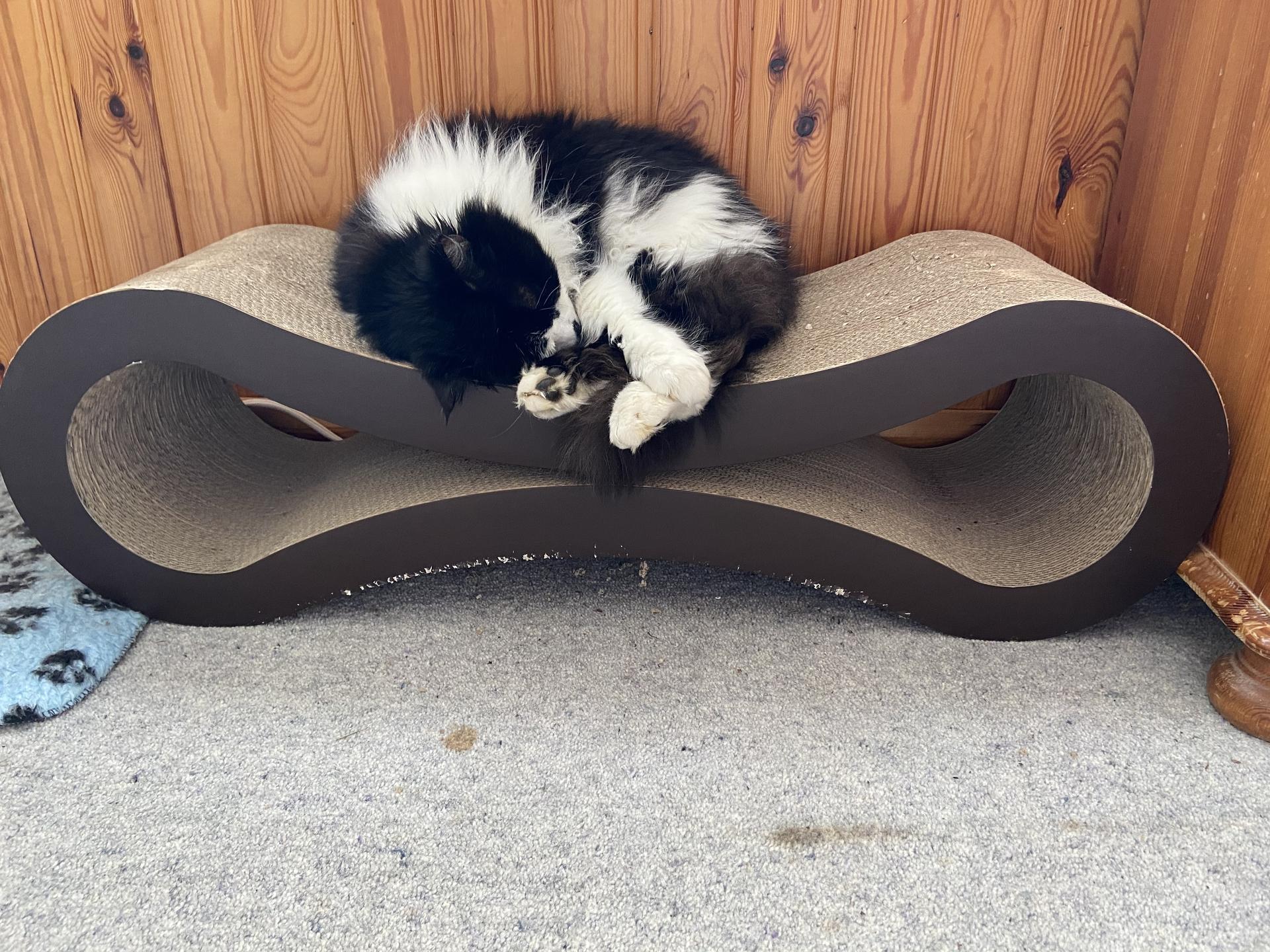 England – Felis silvestris (domestic cat) 'Mr Mittens' – United Kingdom – North East England – Durham – County Durham – The Sands – Durham Home — Mon 16 Mar 2020 13-45-35 GMT — 45914847