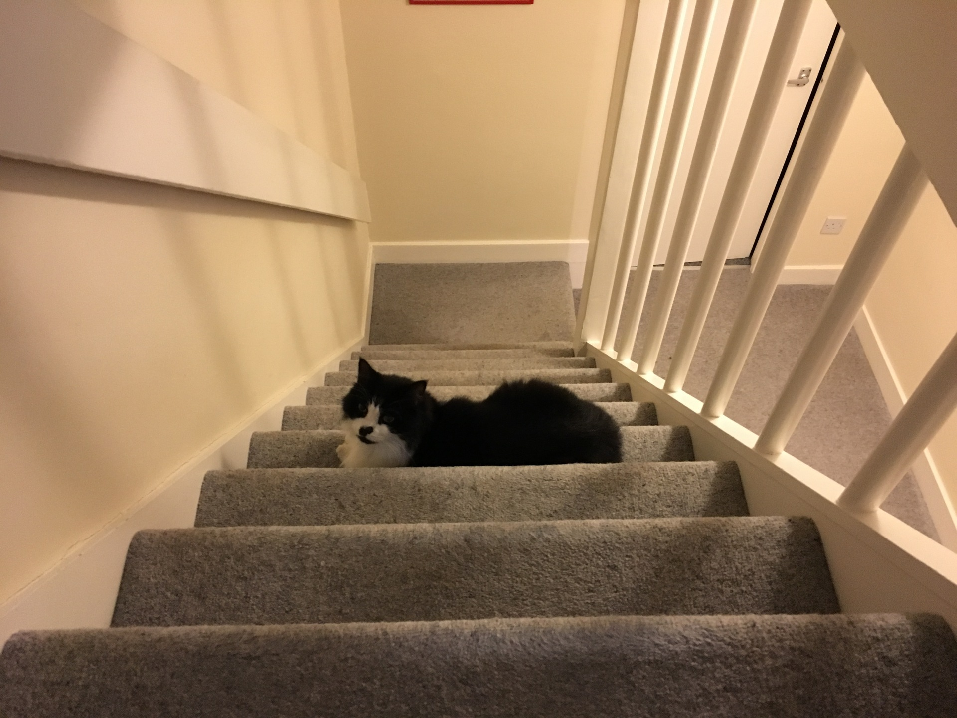 England – Felis silvestris (domestic cat) 'Mr Mittens' – United Kingdom – North East England – Durham – County Durham – The Sands – Durham Home — Tue 21 Feb 2017 18-55-00 GMT — 3872609887