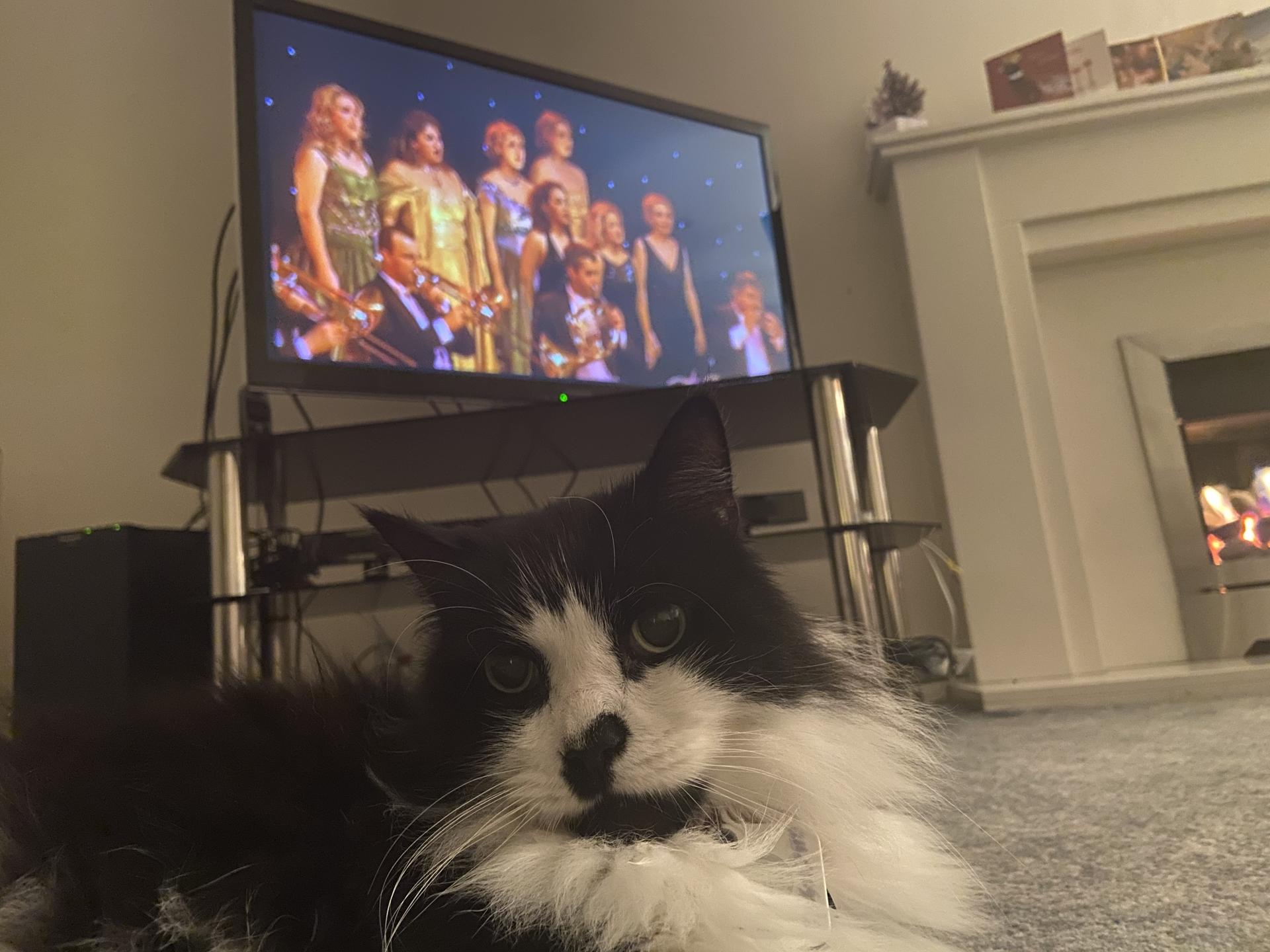Felis silvestris (domestic cat) 'Mr Mittens' – Durham Home — Thu 31 Dec 2020 21-15-11 GMT — 445063966