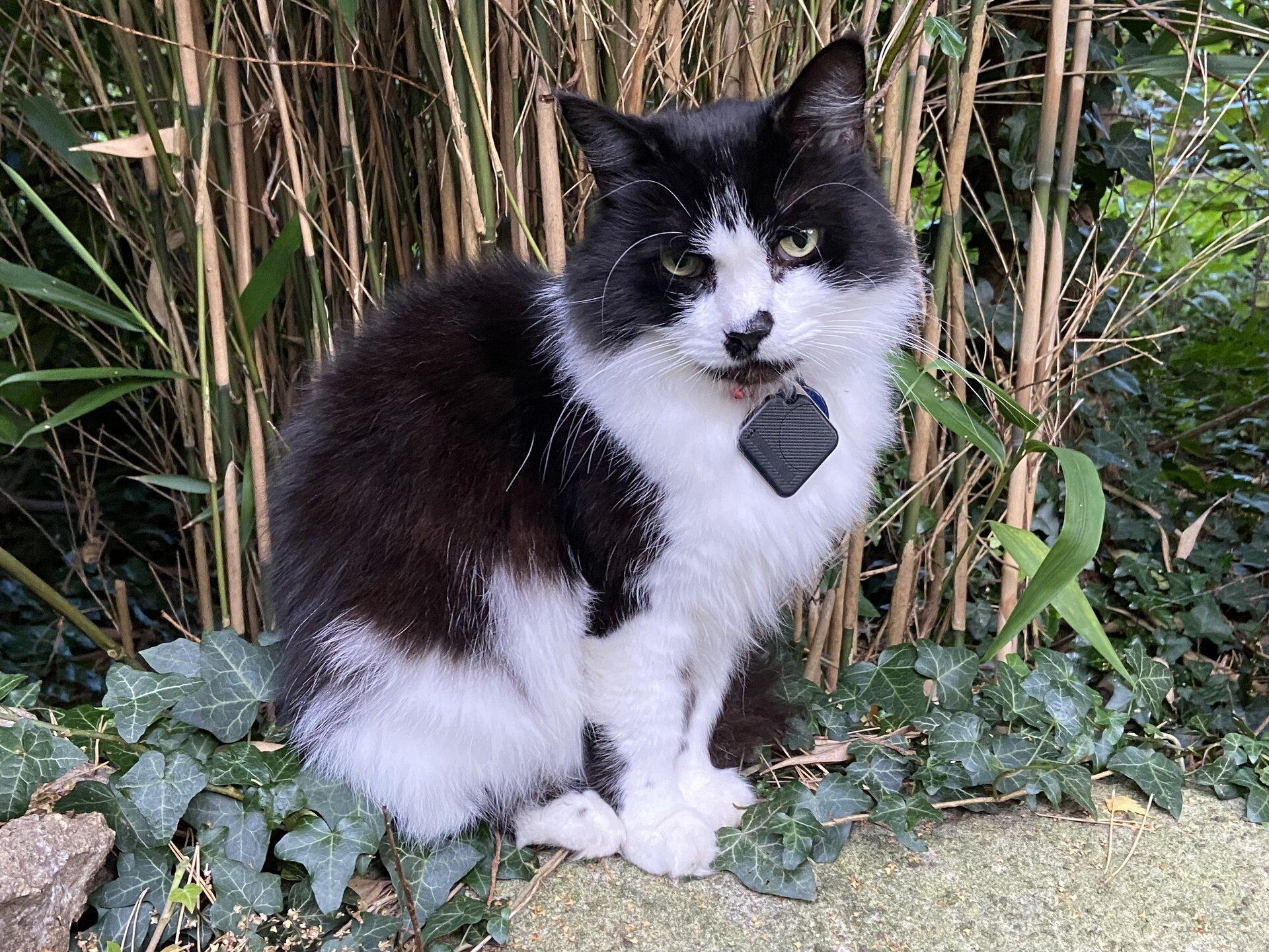 Felis silvestris (domestic cat) 'Mr Mittens' – Durham Home — Wed 07 Oct 2020 17-49-12 BST — 2983341861