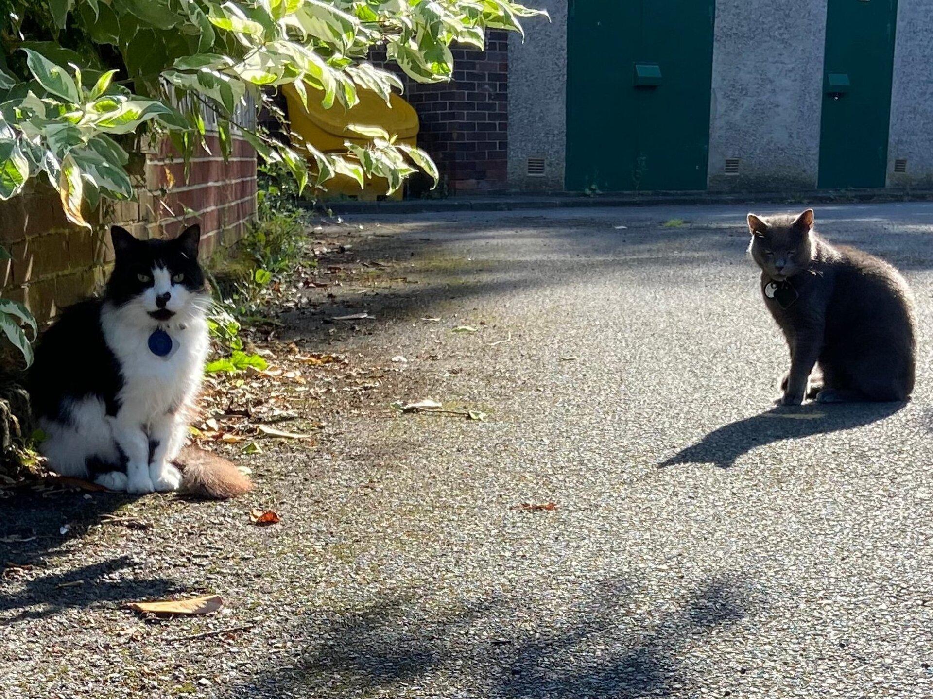 Felis silvestris (domestic cat) 'Mr Mittens' Felis silvestris (domestic cat) 'Willow' Durham Home — Tue 07 Sep 2021 10-08-56 BST — 1157853868