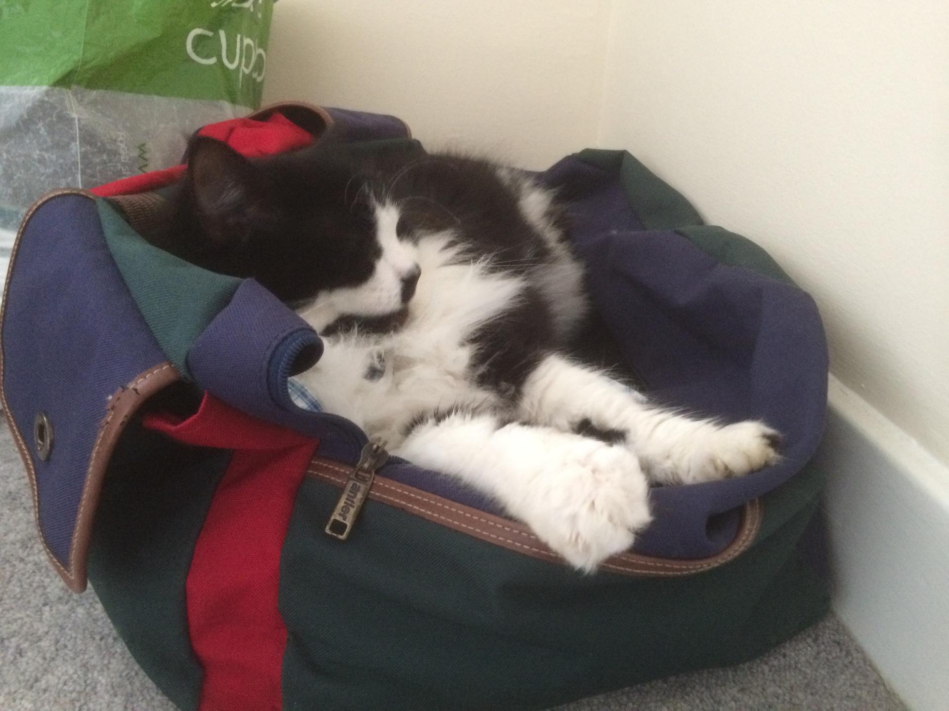Mittens makes himself comfortable – Feb 2016