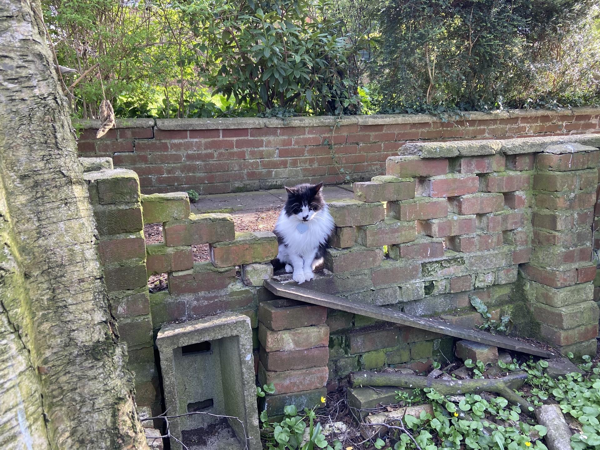 Mittens misunderstands the hedgehog ramp – Apr 2020