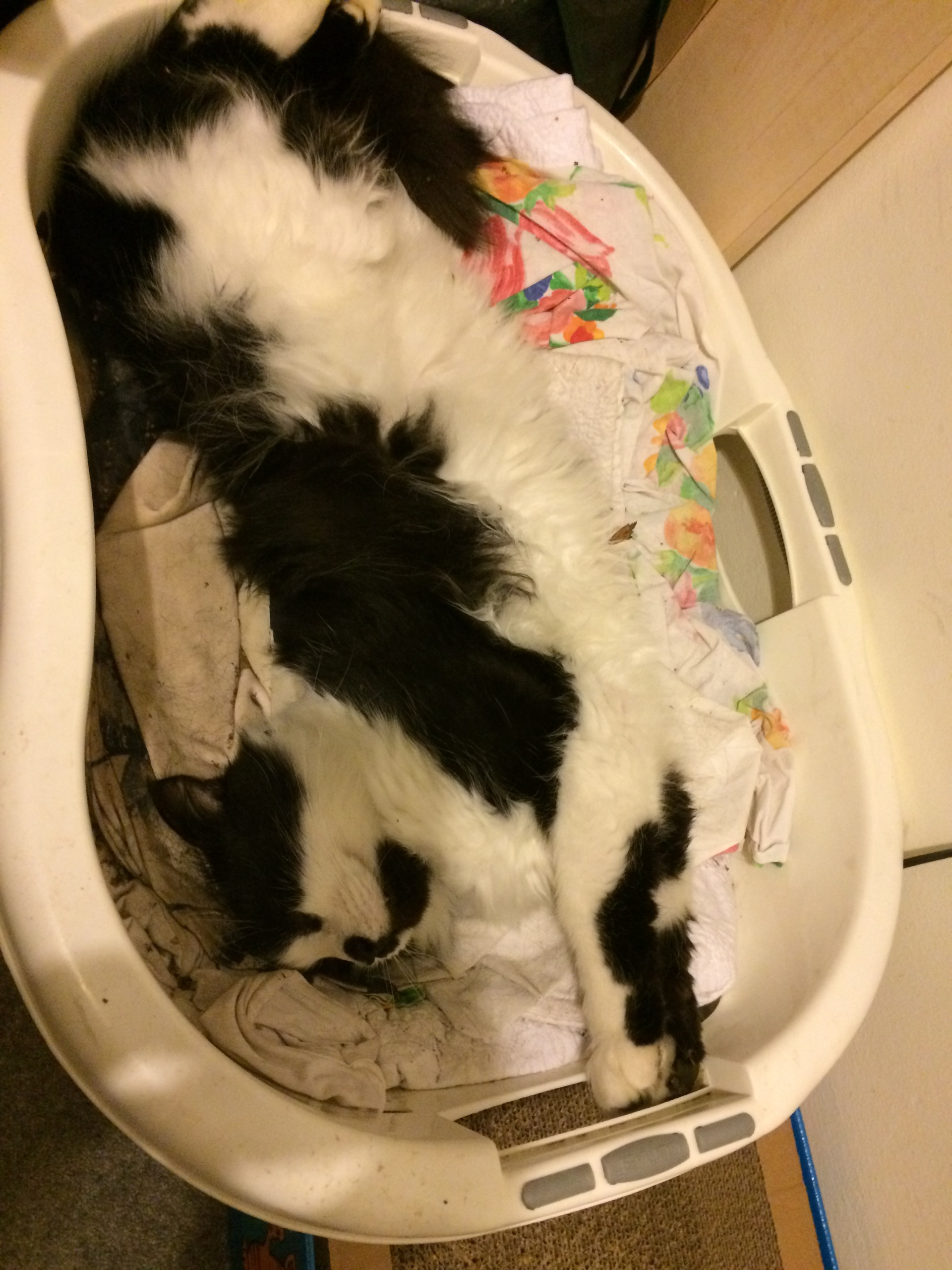 Mittens finds some fresh laundry – Oct 2014