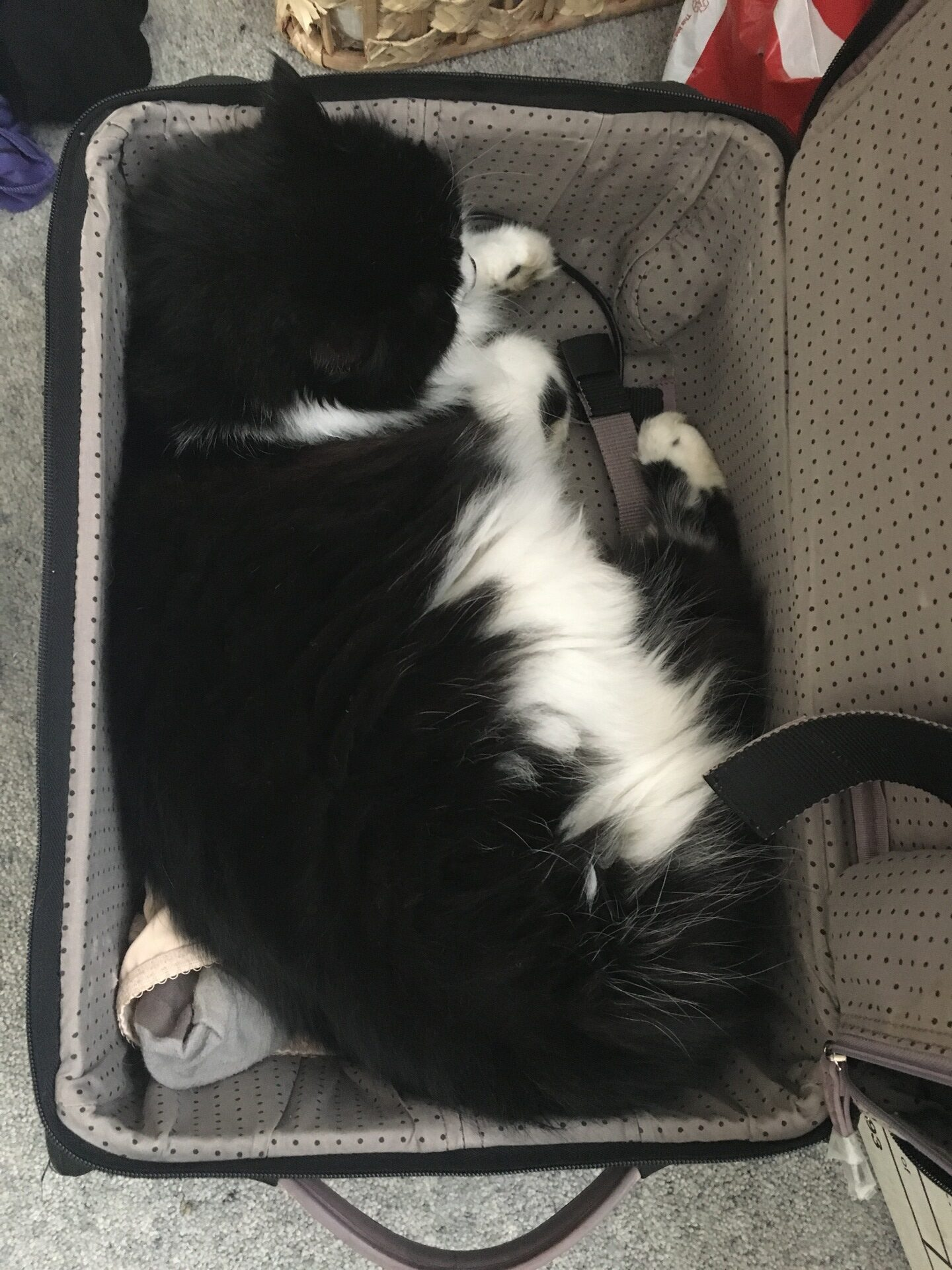 A suitcase makes a comfy bed in 2017