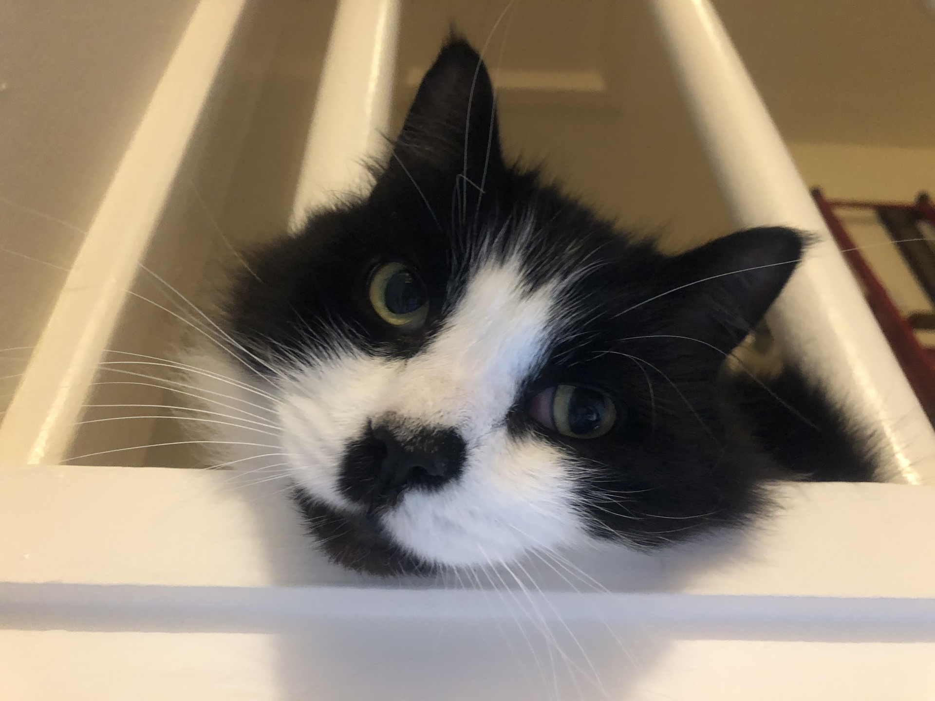 Mittens guarding the stair in 2019