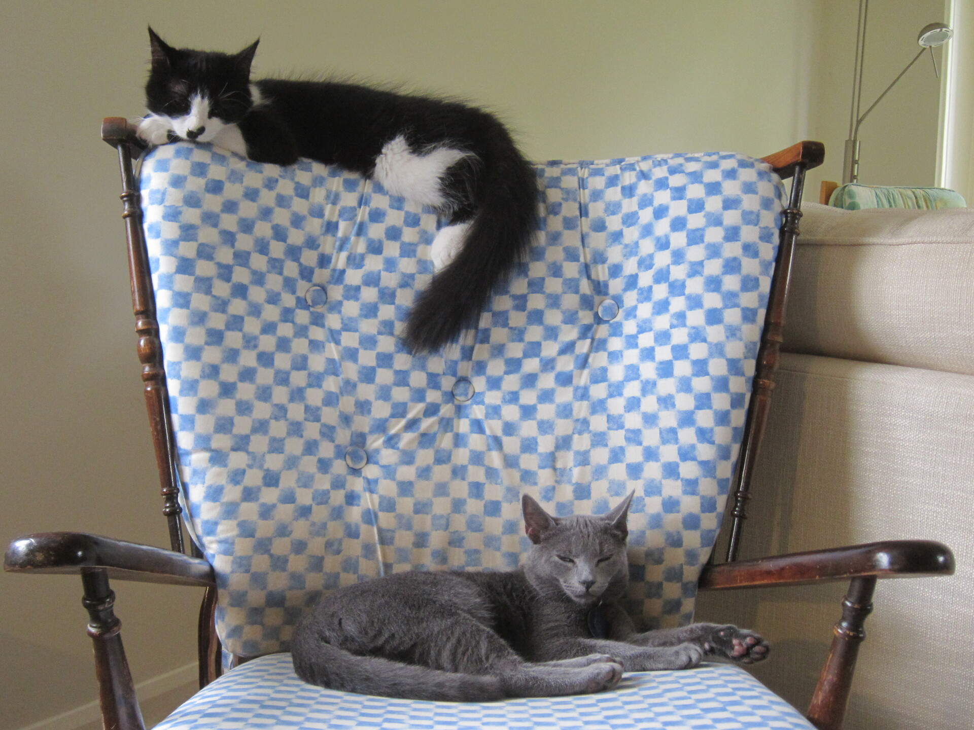Mittens and Willow in 2011