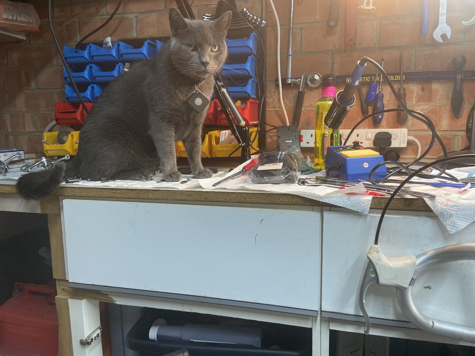 Willow helping in the workshop